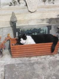 Katze im Blumentopf eines Grabmals.