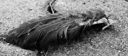 Severed Wing